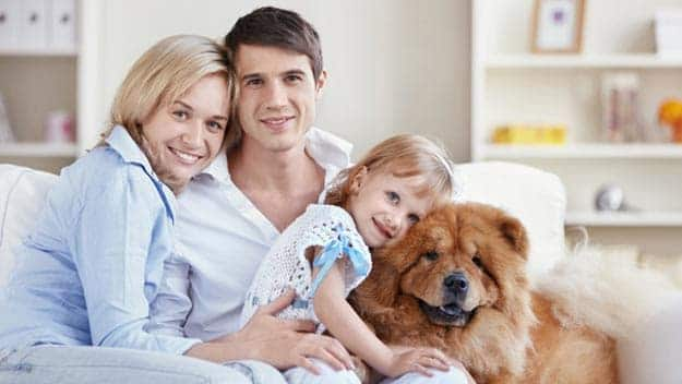 Wills & Trusts dog-young-family Direct Wills Small Heath